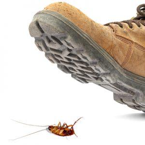 ویدیو حشرات